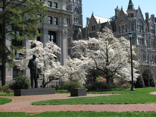 White dogwoods at Capitol Square